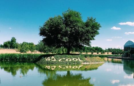 lago madcool